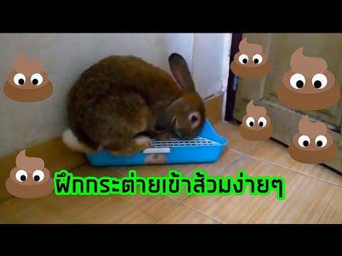 ฝึกกระต่ายเข้าส้วม