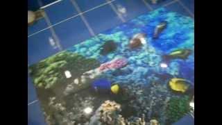 3D полы в ванной. Аквариум в полу(, 2012-10-29T11:11:16.000Z)
