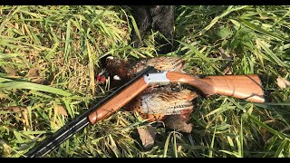 Pheasant Hunting with a .410! | Opening Day Public Land 2018