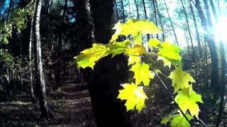 Солнечный лес. Золотая осень. Красиво.  Из приятных впечатлений дня, кинозарисака