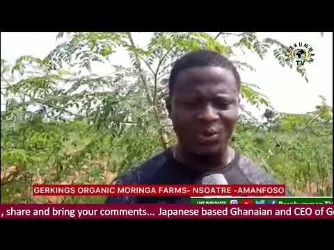 Japanese based Ghanaian and CEO of Gerkings Organic Moringa Farm, Kyeremeh Kingsford Gerald.