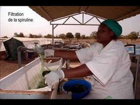 Spiruline in Africa by Nicolas POSTAL, jan 06