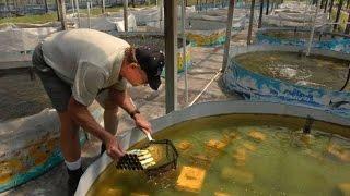 Бизнес идея   Ферма по выращиванию речных раков   Выбираем правильно место(Купить бизнес план - Разведение раков http://www.moneyhunters.biz/crayfish Бизнес идея - Ферма по выращиванию речных раков...., 2015-12-27T09:32:45.000Z)