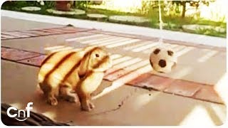 Cute Bunny FIFA World Cup Try Outs