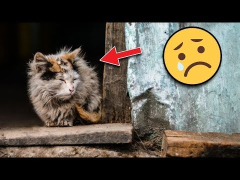 Kediler Ölmek İstediğinde Neden Saklanmaya Çalışıyorlar ? Şok Olacaksınız.