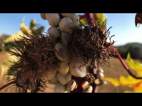 DOWNLOAD: 400ppm – Spirtu Pront (Official Video) Mp4 song