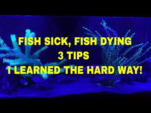 FISH SICK, FISH DYING - 3 TIPS I LEARNED THE HARD WAY!