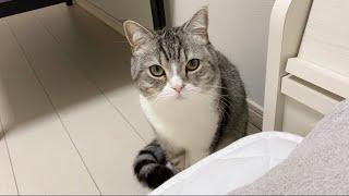 体調不良の飼い主が心配で枕元から離れない猫がこちらです…