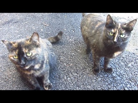 Tortie cats on the street came to me