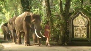 Riding-Elephants-in-Ubud-700x515 Bali Elephant Camp Ubud