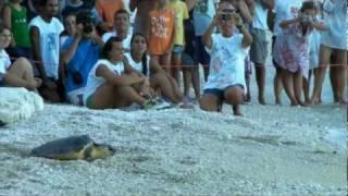 Tarta Day 23/08/2011, liberazione Caretta caretta ferita Numana Riviera del Conero