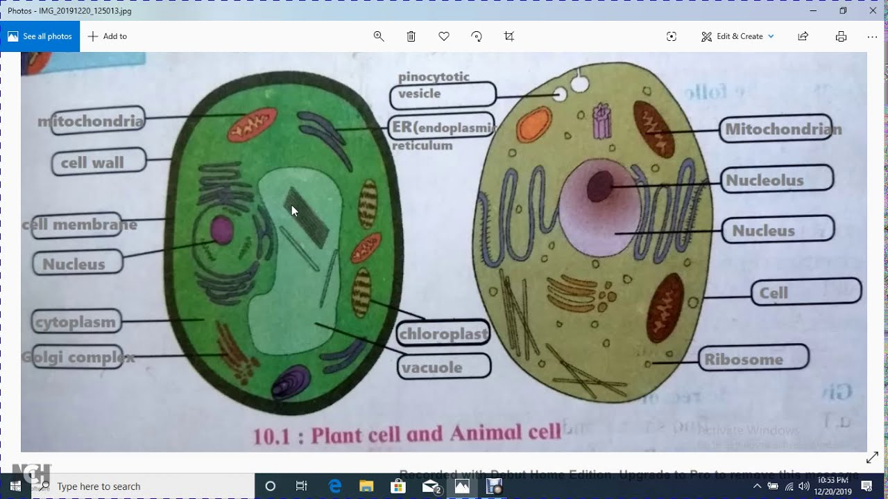 plant cell and animal cell diagram for class 8 | plant ...