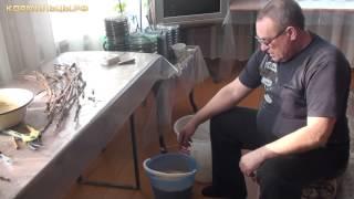 Технология выращивания винограда -- ч.1(Технология выращивания винограда -- ч.1 Подготовка винограда к высадке Видео записано администрацией..., 2012-03-22T07:52:23.000Z)