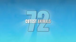 72 Cutest Animals - Trailer