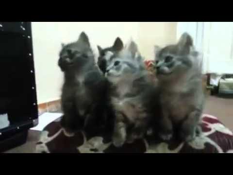 D K Cat eid Mubarak song
