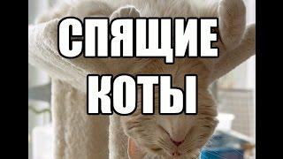 Спящие коты - ржака