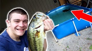 Stocking BASS in our POOL POND!!!