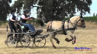 002M Leslie Berndl Preliminary Single Pony Marathon Sargent Equestrian CDE August 2015