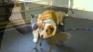 Canine Costars Obedience Class