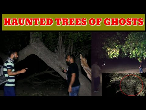 Yeh Kya Tha | Episode 34 | 24 August 2019 | Haunted Trees Of Ghosts | The Paranormal Show