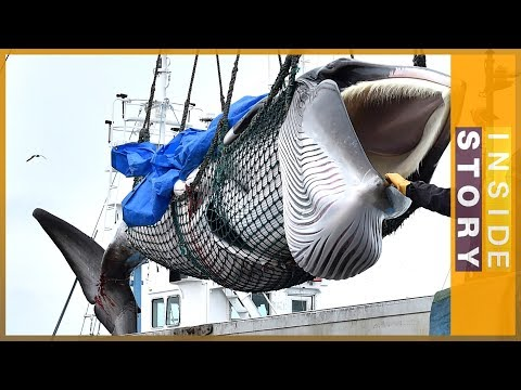 Why is Japan killing whales? | Inside Story