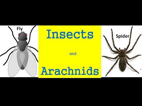 Insects and arachnids  for kids - Differences And Similarities