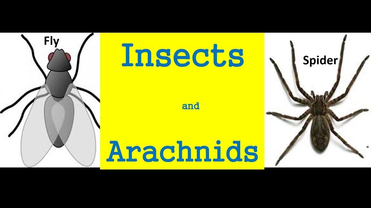 insects and arachnids for kids differences and similarities
