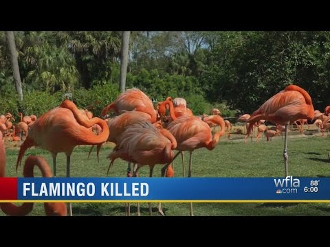 Pinky the flamingo dead after attack