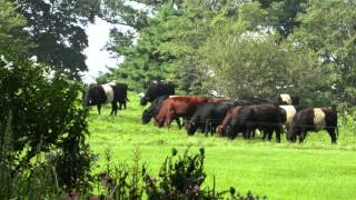 Protect Mainstone Farm in Wayland, Massachusetts