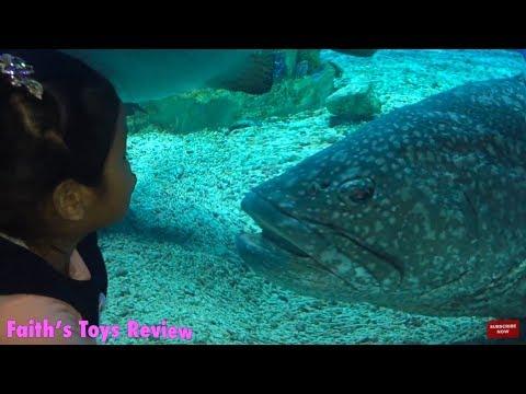 Manila Ocean Park 10 Attractions (PART 1) BIG FISHES & BIG AQUARIUMS