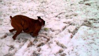 Boxer Zoomies In The Snow!