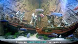 Аквариум Ювель Тригон 350 с цихлидами • Juwel Trigon 350(Ювель Тригон - угловой стеклянный аквариум с освещением и оборудованием. Отлично подходит для содержания..., 2012-03-17T05:44:16.000Z)