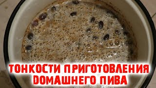 Домашнее пиво из хлеба Из домашних дрожжей Простой рецепт Секреты приготовления