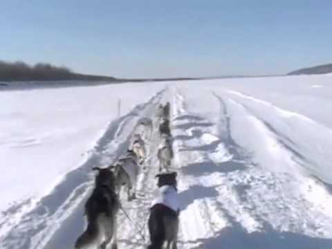 "Iditarod 2012- ""Aliy Cam"" Yukon River Part One"