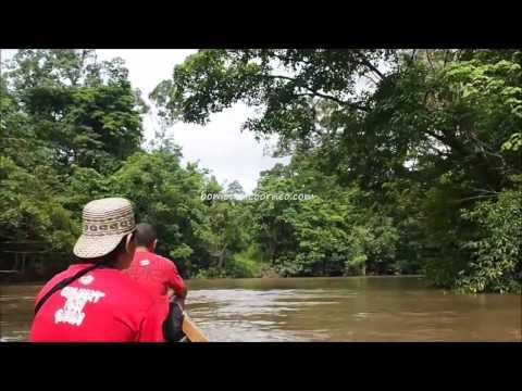 Speedboat Ride Along Seluas River, Kalimantan Barat Indonesia Travel