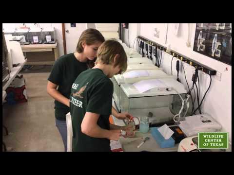 Wildlife Center of Texas Internship Program