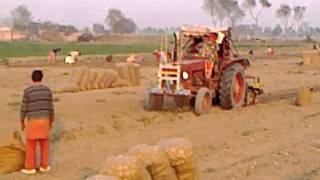 191 Adeel Ahmed agriculture farm @depalpur, pakistan
