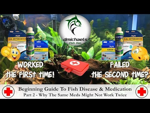 Beginning Guide To Fish Disease & Medication - Part 2 - Why The Same Meds Might Not Work Twice
