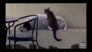 Il gatto massaggiatore