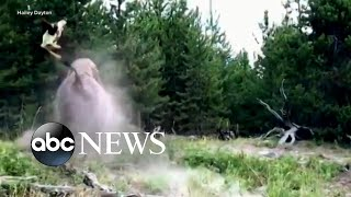 Bison attacks 9-year-old girl at Yellowstone National Park