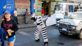Cebra, el proyecto que apuesta por las normas viales en Bolivia