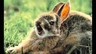 смешные животные фото, прикольные картинки с животными.