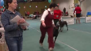 Всероссийская выставка собак Новосибирск 11 ноября