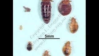 Bed Bug Prevention and Identification Bernardsville NJ 732-309-4209 | Bed Bug Control New Jersey