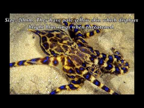 Molluscs of Port Noarlunga Reef