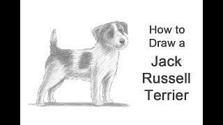 How to Draw a Dog (Jack Russell Terrier)