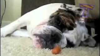 ржачное видео про то как животные спят