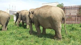 🐘🐘🐘 Слоны в Бобруйске