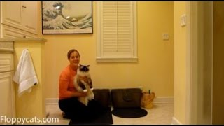 Best Cat Litter Mat: Moonshuttle Blackhole Cat Litter Mat Review - ラグドール - Floppycats