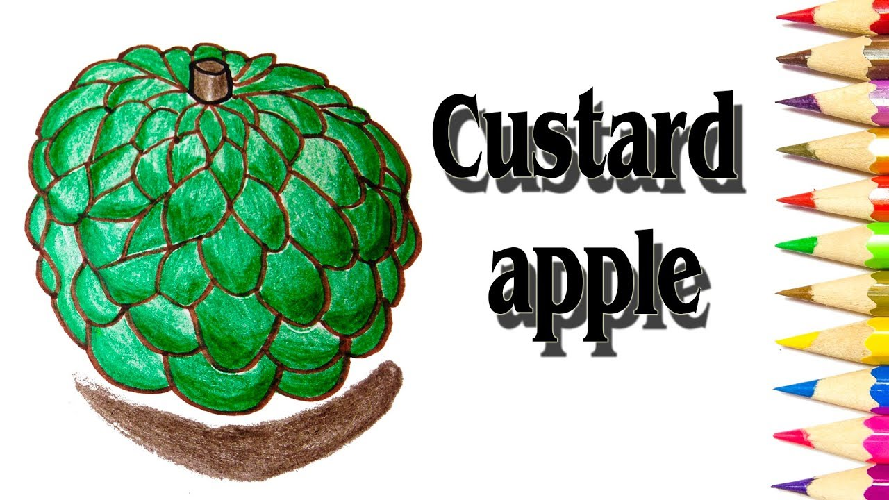 How to Draw a Custard Apple | Custard Apple Simple Drawing ...